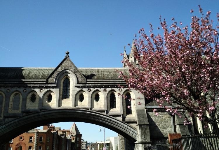 Mi estadía en Dublín: Semana 7