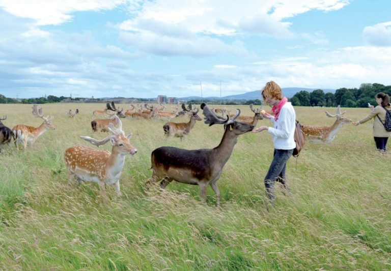 meeting a herd of deers